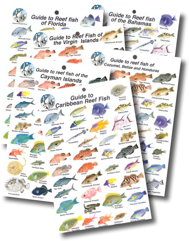 Dive-Logs.com - Fish Identification Card - Caribbean Collection of ...
