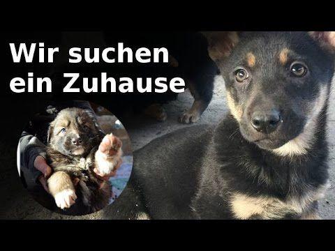 Diese süßen #Hunde #Welpen suchen alle ein Zuhause #cute