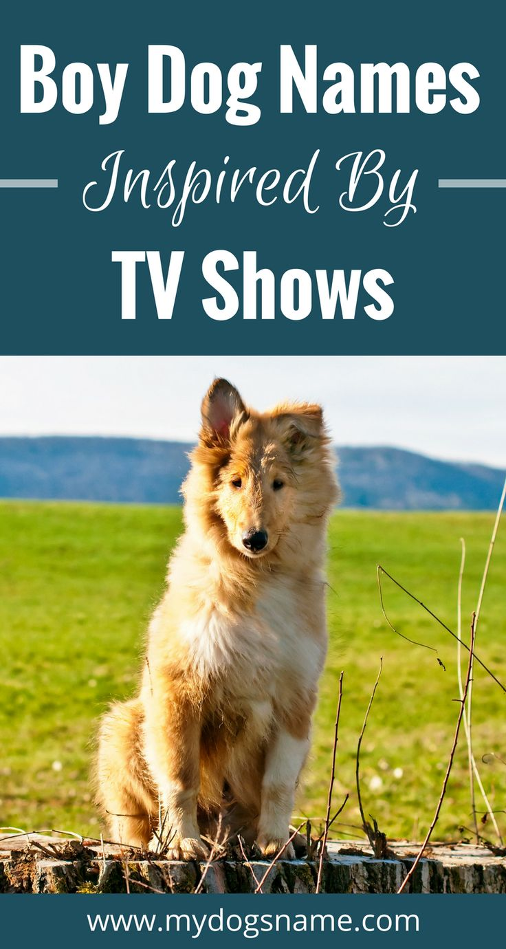 Awesome boy dog names inspired by your favorite TV shows.