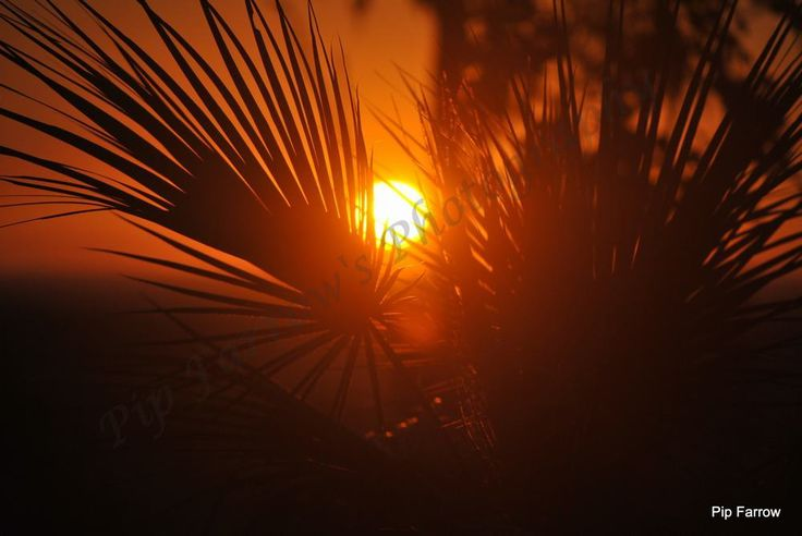 A stunning Northern Territory Sunset taken through the leaf of a Pandanas Palm on my return trip to Arnhem Land in 2012.