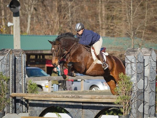 ARIA Certified Riding Instructor specializing in Hunter-Jumper and Dressage for beginners-advanced riders and horses