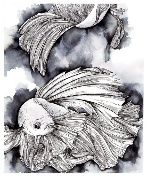 Pen and Ink drawing of Betta Fish, Betta Splendens