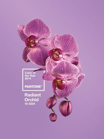 Pantone Colour Of The Year 2014 – Radiant Orchid | LuxPad