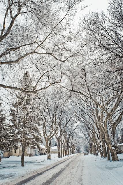Winter Road, Winnipeg, Canada ! photo by Carla Dyck
