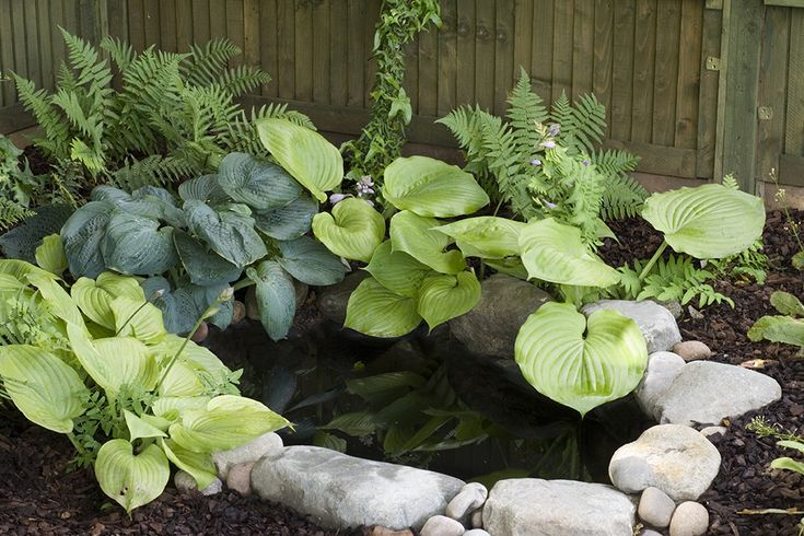 Mini pond with big impact. Large rocks add impact to a small pond. Surround it with hostas, which love damp shady spots.