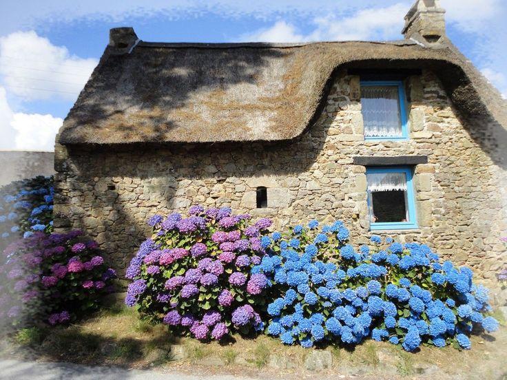 Hortensias bleus...bretons!                                                                                                                                                      Plus