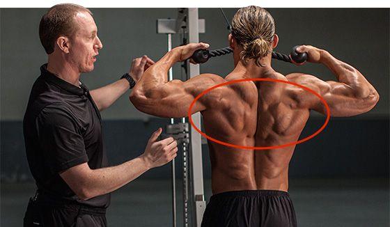 Mejores 21 imágenes de Anatomy en Pinterest | Anatomía, Anatomía ...