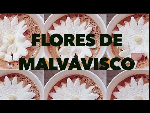 FLORES DE MALVAVISCO. EXPECTATIVA/REALIDAD - YouTube