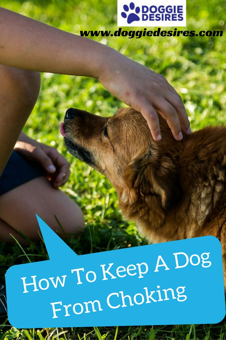 How to keep a dog from choking >> http://doggiedesires.com/how-to-keep-a-dog-from-choking/