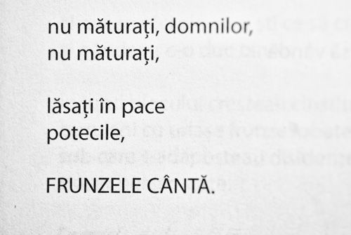 frunzele canta...