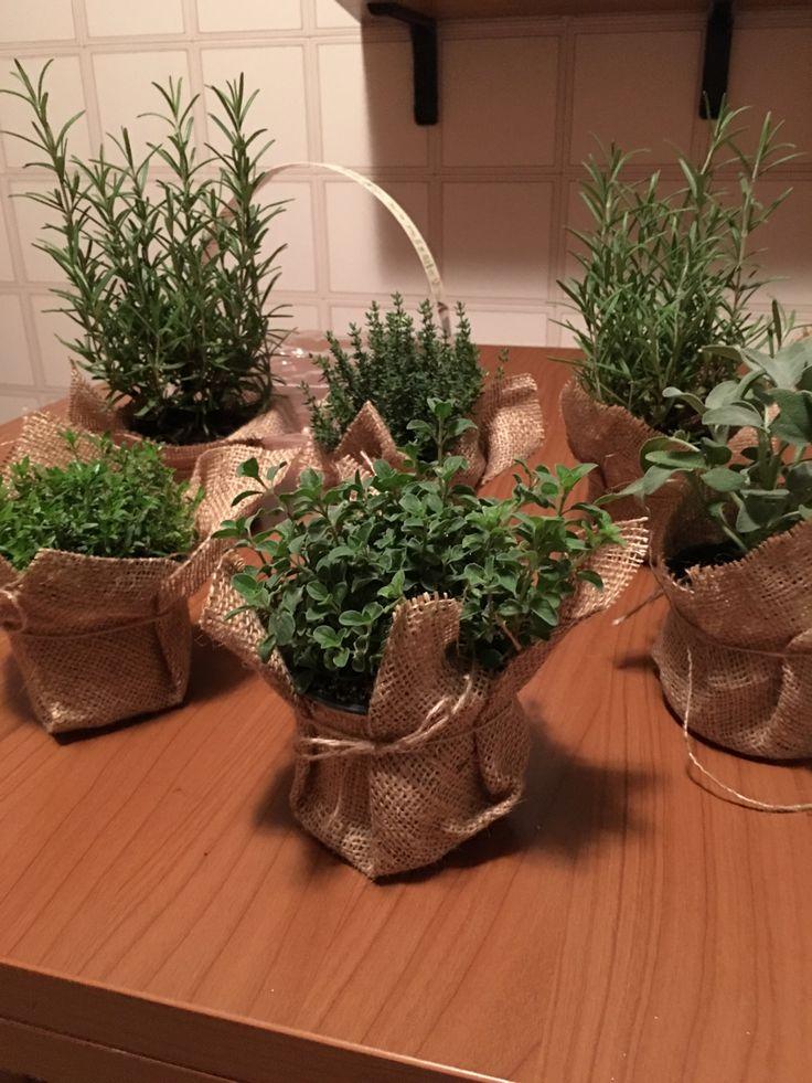 Herbs plants, for Danis's wedding!