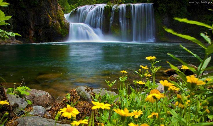 Wodospad, Rzeka, Skały, Las, Kwiaty, Wiosna
