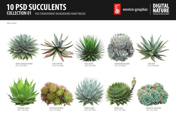 Check out 10 PSD Succulents Collection 1 by envirographic on Creative Market
