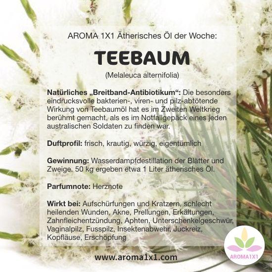 """TEEBAUMÖL wurde im Zweiten Weltkrieg berühmt, als es im Notfallgepäck eines jeden australischen Soldaten zu finden war. Seine eindrucksvolle bakterien-, viren- und pilz-abtötende Wirkung machen es zu einem """"natürlichen Breitbandantiseptikum"""" und gehört in jede HAUSAPOTHEKE!  Tipps und Rezepte mit Teebaumöl bei AROMA 1x1.com"""