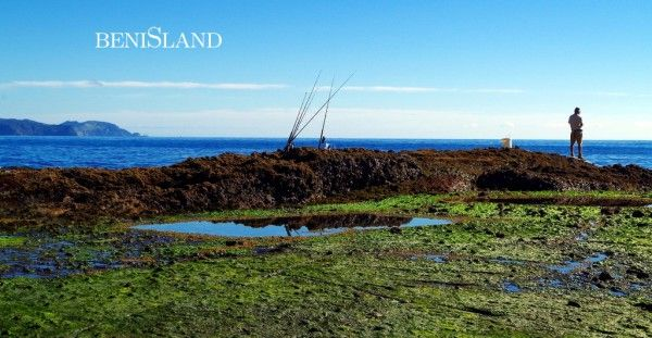 Photos Of The Week 1 – Great Barrier Island