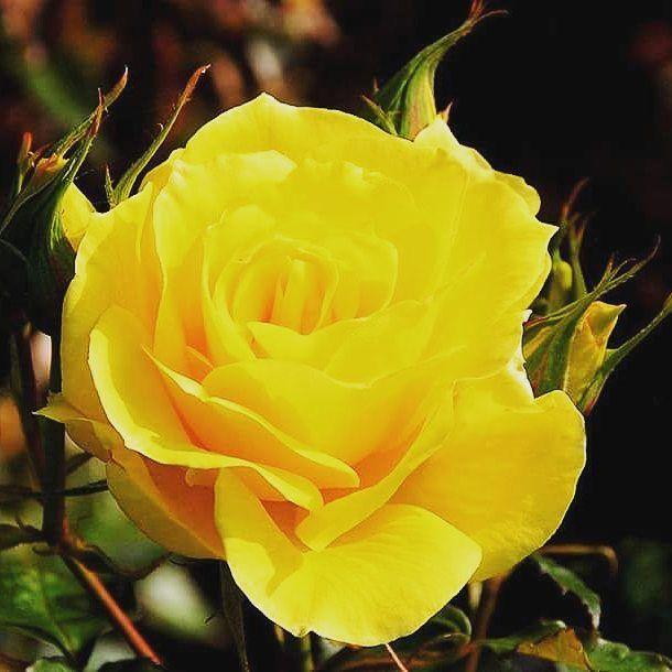 Soneto:Y cuando nuestra alma llama a la vida.  Y cuando nuestra alma llama a la vida plasmado en verso poético con tal de que la mente sienta nuestro total designio humano; ahora de por vida.  La psique busca paz interior; cuida siempre el léxico sublime e inmortal en literatura lírica; vital para la especie humana consabida.  Modelar la existencia con ese amor que denota la vida del camino que hemos de recorrer con pleno candor.  Poema con claro futuro; reino en arte de la palabra con sabor…