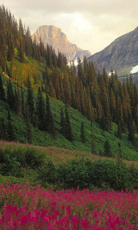 Wild flowers at Glacier National Park in Montana • photo: Donnie Sexton on Glacier Country Montana