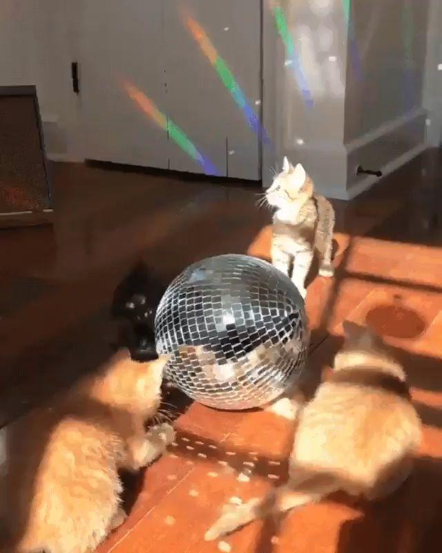 Kitten disco.