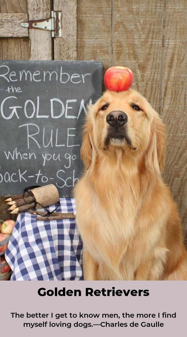 Golden Retriever Puppy Goldenretriever Goldenretrievertshirt