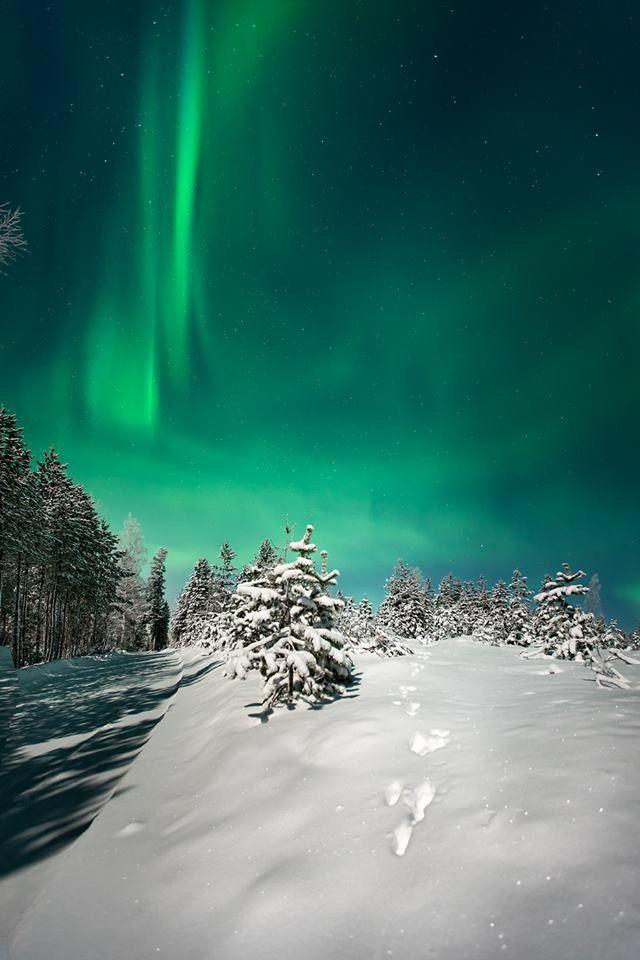 Winter northern lights in Rokua national park. Rokua Health & Spa Hotel, Finland.