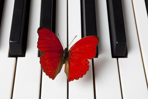 As gentle as music ~ #music #butterfly