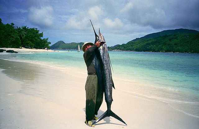 If you are sport fishing in Costa Rica, expect to see some extraordinary fish that you may have never seen up close. Sailfish and Marlins are among the most sought-after game fish in the world, and we have both here in Costa Rica! The Marlin here can get up to 600 pounds, and we have both the black and the blue varieties. Sailfish fishing is great because it goes strong year 'round! There may be certain times that are better than others, but the numbers are high all year.