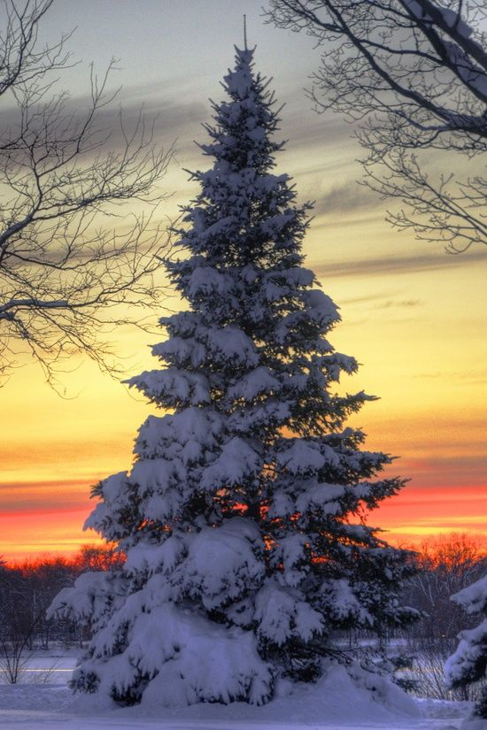Nature's Christmas Tree: Xmas Trees, Winter Trees, Sunsets, Winter Wonderland, Christmas Eve, Christmas Trees, Mothers Natural, Winter Beautiful
