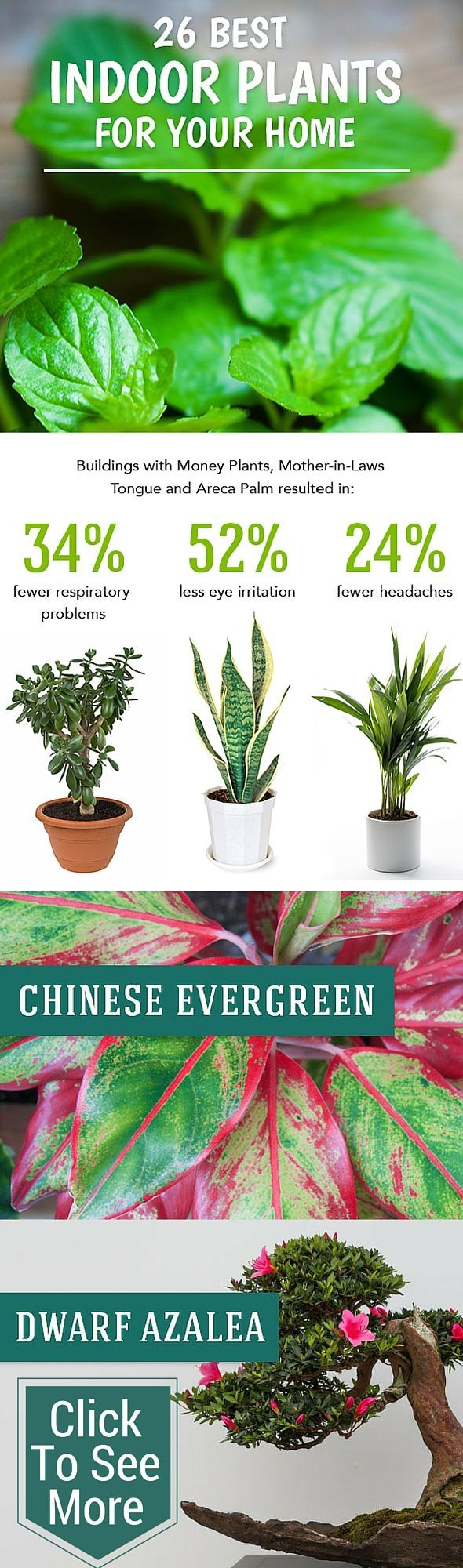 Best Indoor Plants to Help Purify Your Air