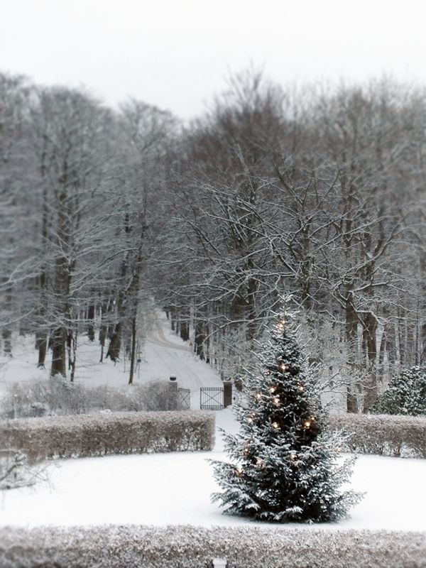christmas tree on a grand scale and snowy woods