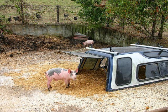 Truck cap pig shelter