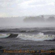 Sturgeon Lake - Bobcaygeon - City of Kawartha Lakes