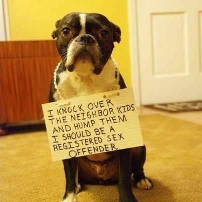 17 Hilarious Dog Shaming Pictures #dogs