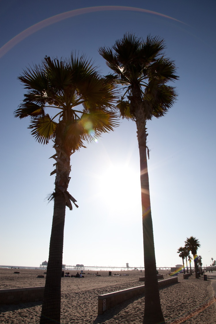 Huntington Beach CA Palm Trees