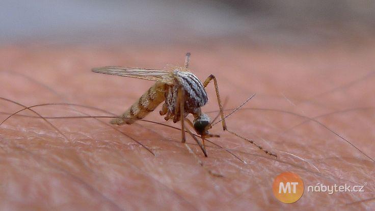 Komáři jsou velice nepříjemní společníci. Vyrobte si pro ně neodolatelnou pastičku. Foto: Flickr.com/John Tann CC BY 2.0