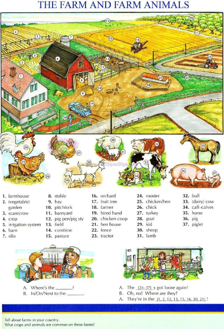 111 - THE FARM AND FARM ANIMALS - Picture Dictionary - English Study, explanations, free exercises, speaking, listening, grammar lessons, reading, writing, vocabulary, dictionary and teaching materials