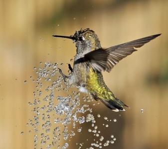 Gorgeous hummingbird photos! hummingbird-haven
