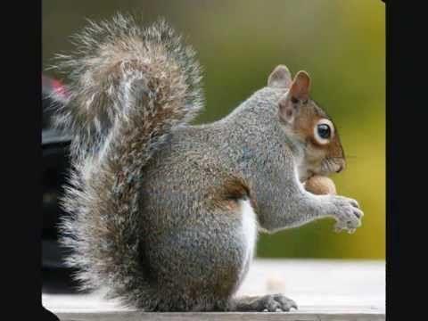 Zvuky domácích zvířat / Zvuky hospodářských zvířat - YouTube