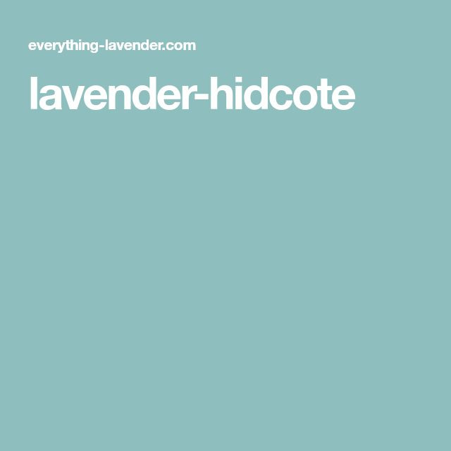 lavender-hidcote