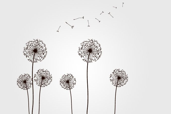 Dandelions with Flying Seeds Vector (Free) | Free Vector Archive