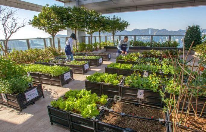 Rooftop Gardening Organic Gardening Rooftop Gardening Anic Gardening Gard In 2020 Rooftop Garden Urban Roof Garden Design Courtyard Gardens Design