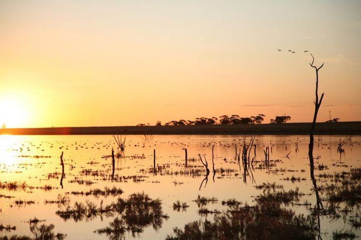 Lake Grace, Western Australia Photo by: Grant Medlen, Lake Grace Camera Club http://www.australiasgoldenoutback.com/travel-destinations-outback-australia/Wheatbelt_and_Wave_Rock/Southern_Wheatbelt/Lake_Grace_and_Newdegate