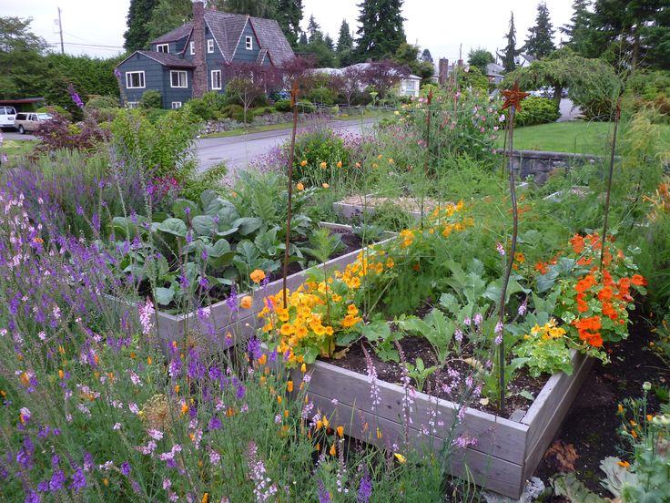 35 Best Ideas About Wildflower Beds On Pinterest Gardens