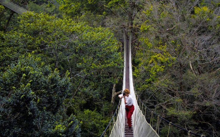 Rainforest Canopy Walkway Travel 2017