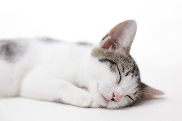 「猫の運動会」!真夜中に走り回る原因と対策
