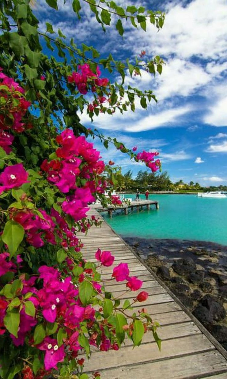 Heavenly beauties of Mauritius Dhruba Das