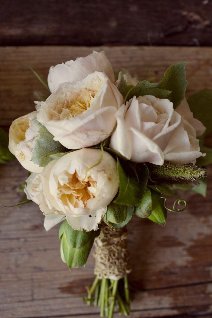 Garden Roses, Roses, Camellia Foliage, Millet