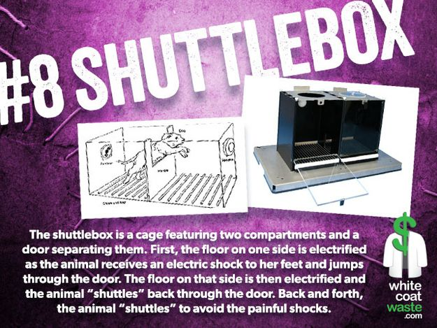 "When I google shuttlebox, you know what comes up? LEARNED HELPLESSNESS. From Wikipedia: ""Summary: In the learned helplessness experiment an animal is repeatedly hurt by an adverse stimulus which it cannot escape.  Eventually the animal will stop trying to avoid the pain and behave as if it is utterly helpless to change the situation."" WTF?????????????? ++"