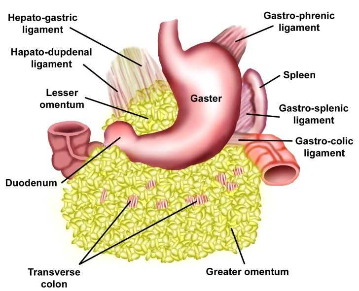 203 best Systems: Gastrointestinal images on Pinterest | Health ...