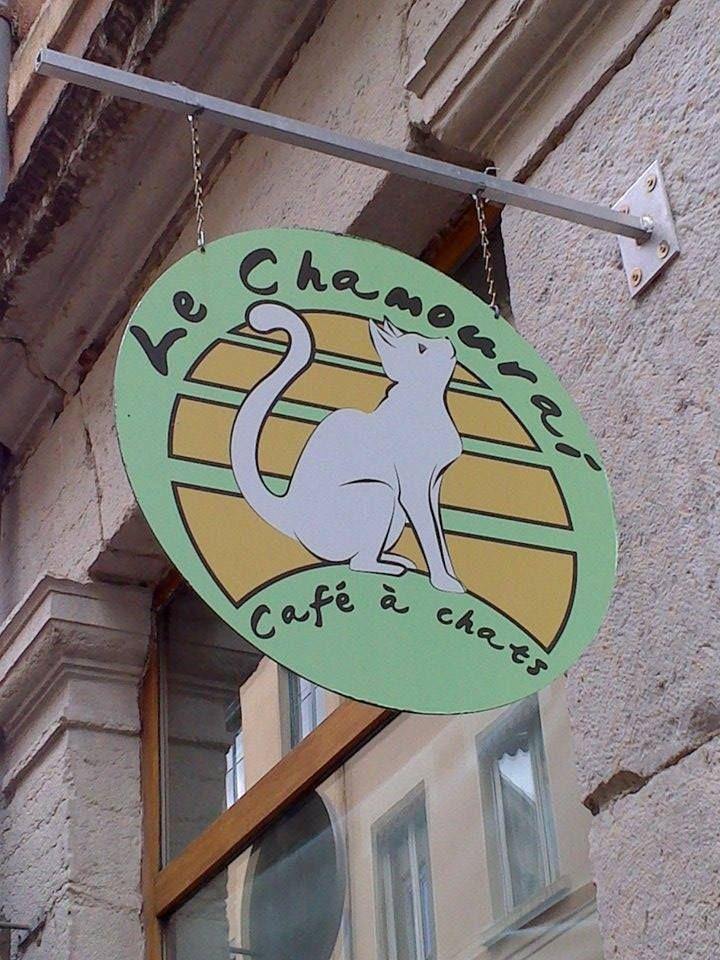 Bar à chats Le Chamouraï, Lyon