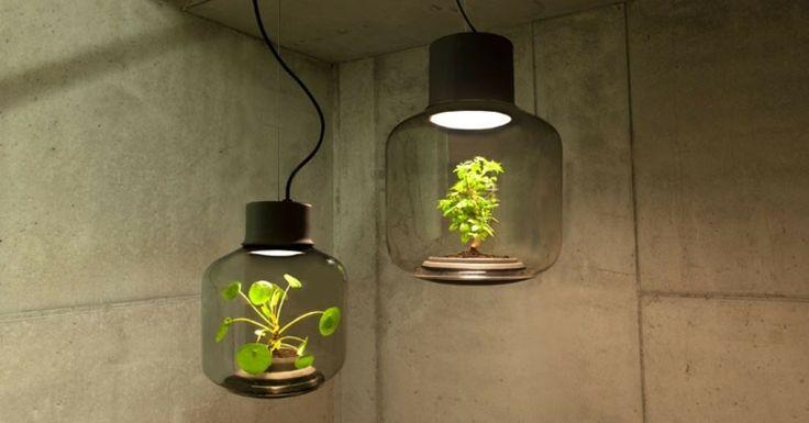 Zwei schöne LED Pflanzenlampe beleuchten den dunklen Raum